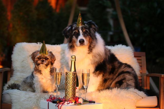 dog luxury coworking at Amazon